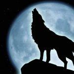 Power Wolf Essence Reiki