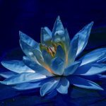 Blue Lotus Energy Healing System