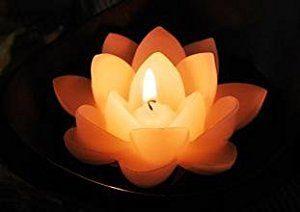 Lotus Petal Reiki