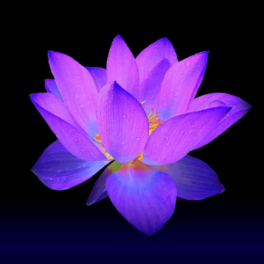 Chakra Healing Reiki Package