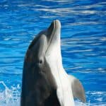 Dolphin Heart Reiki