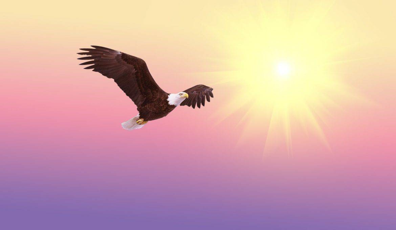 Eagle of Light Brigade Attunement