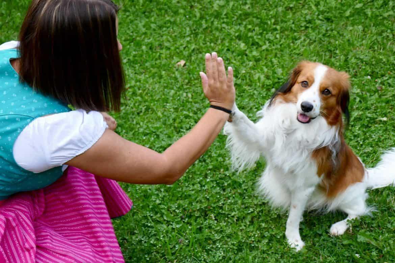 Animal Soul Communication Reiki
