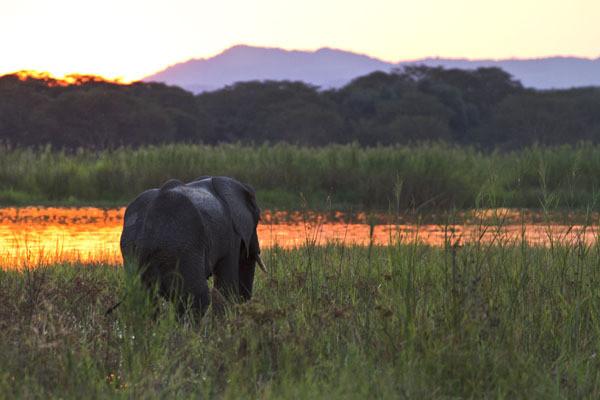 Elephant-Mvuu-Liwonde-blog.jpg