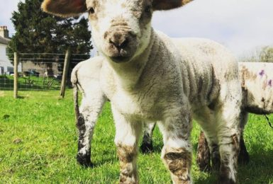 Farmer Gill's mobile farm joins Ribble Valley