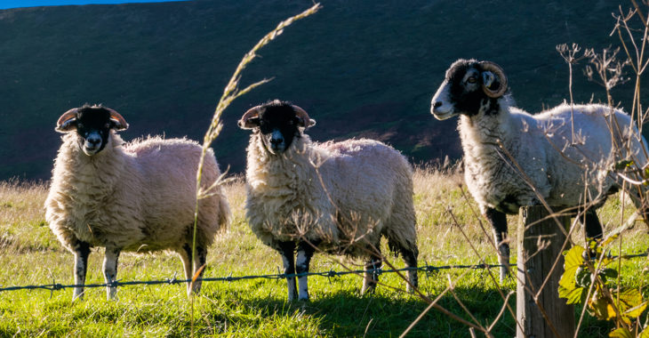 There's so much going on at Yorkshire Dales take a look at our recent news