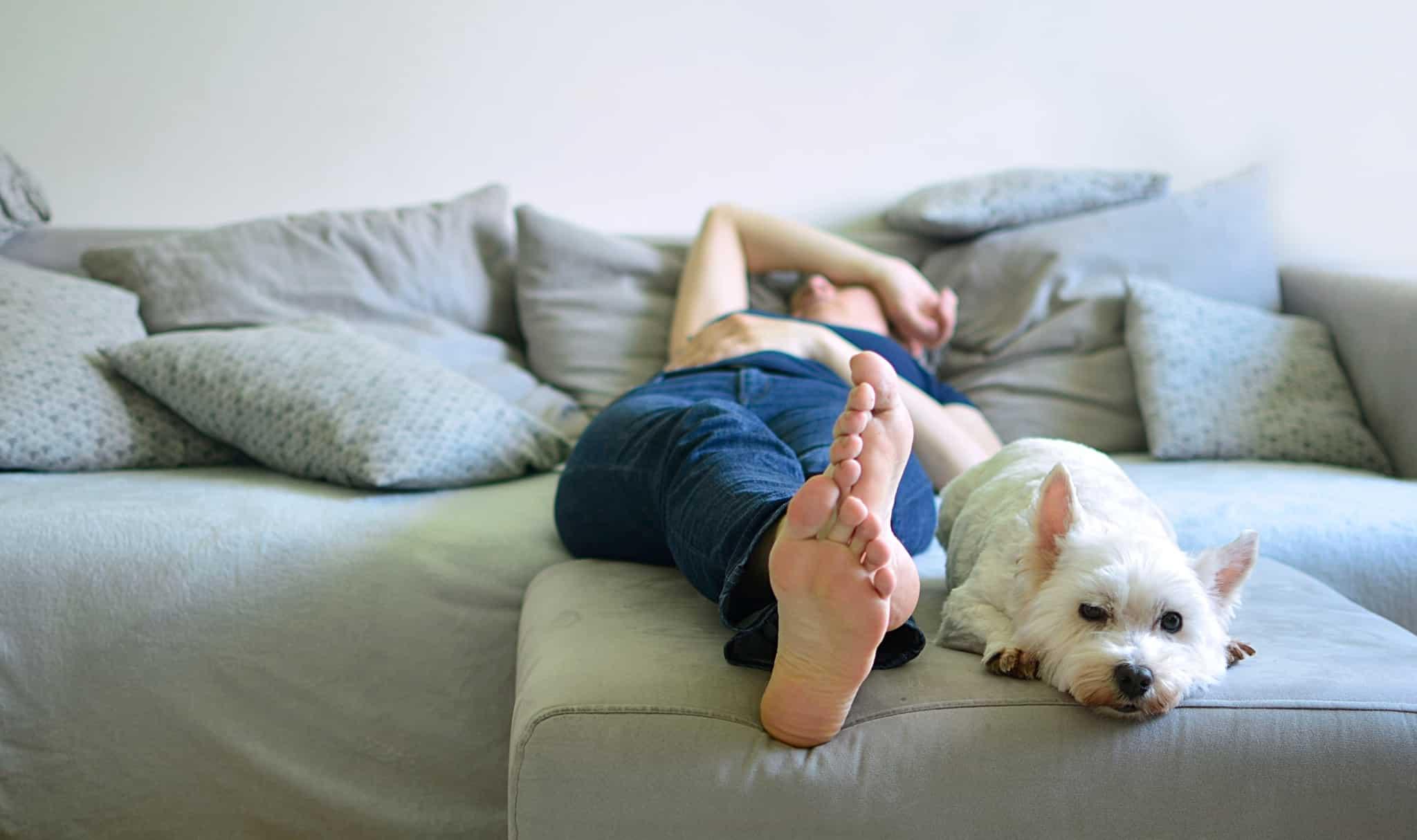 cão e dono no sofá em casa