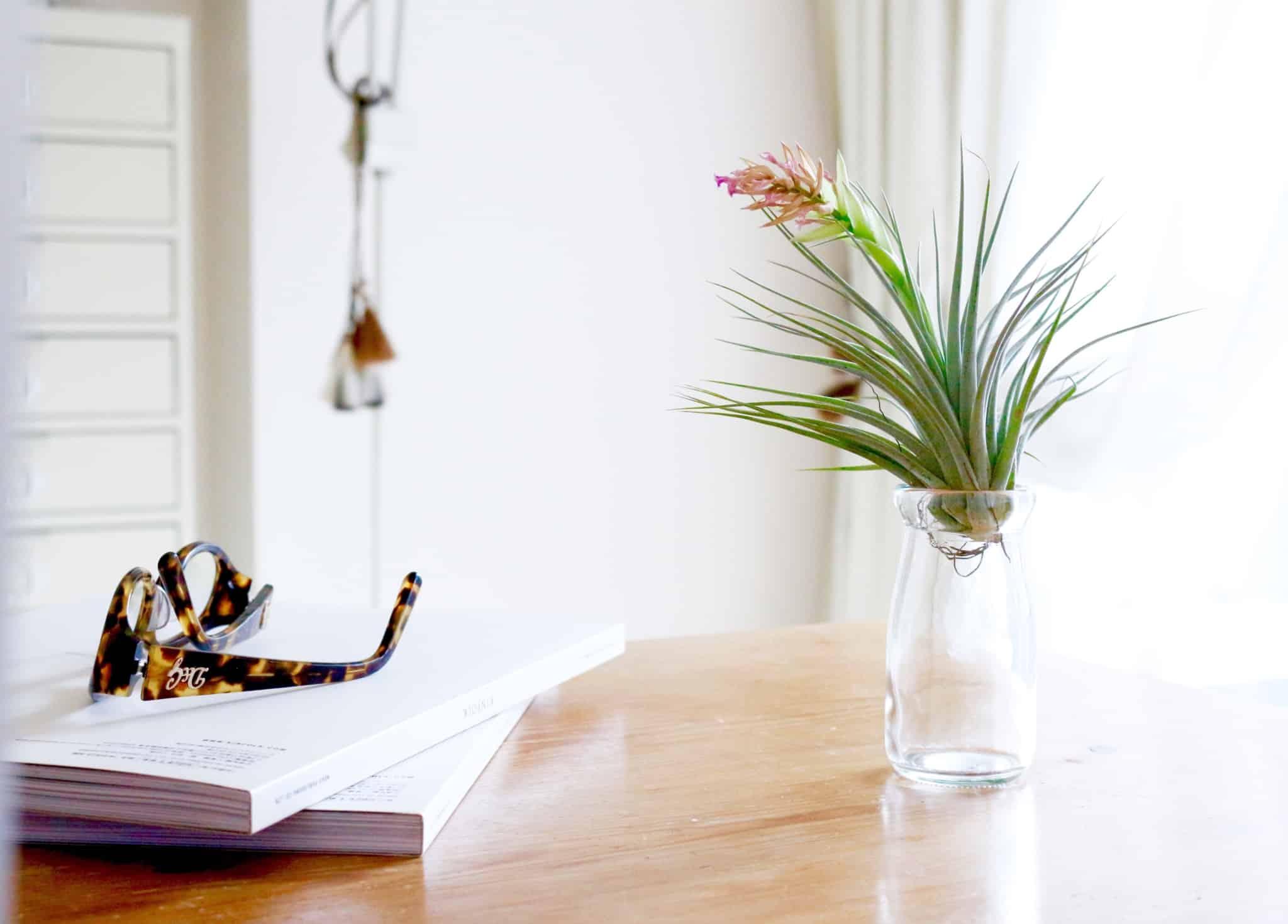 oculos de sol em cima de livros e uma planta em cima da mesa