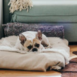 Should landlords allow pets in their property?