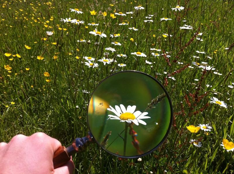 magnifying nature