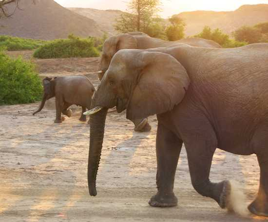 Elephant and other wildlife roam the Damaraland
