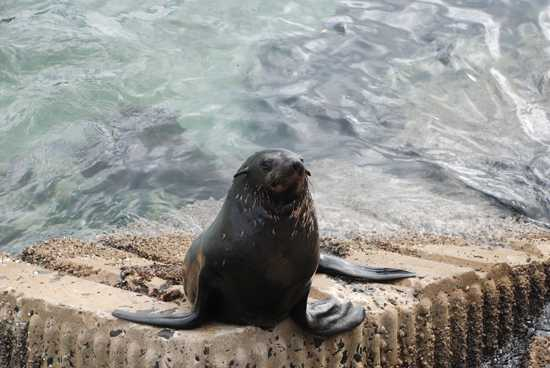 The marine mammal, the seal, forms part of the Marine 5