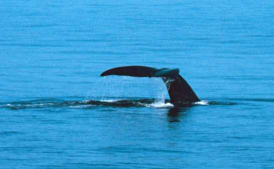Whales are another of the must-see Marine 5 animals