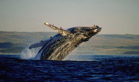 Spot whales along the Garden Route