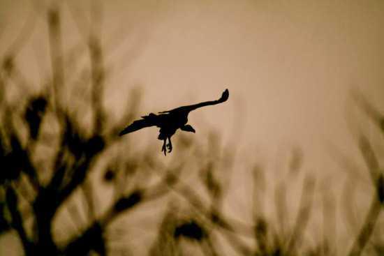 Take your binoculars along to view the birdlife