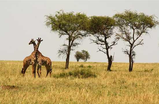 Go on Big 5 game safaris