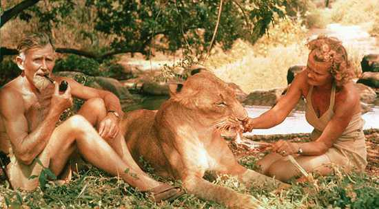 Joy Adamson with her husband George feeding a lion