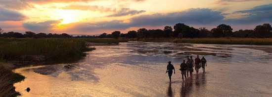 South Luangwa National Park is one of the best spots for a walking safari in Zambia