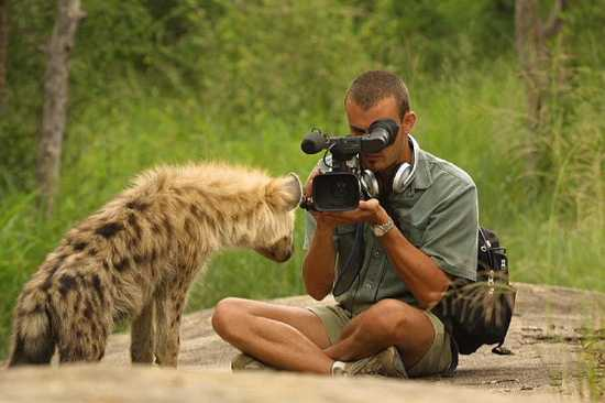 Videographer Barend getting a young hyena on camera