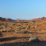Sparse vegetation