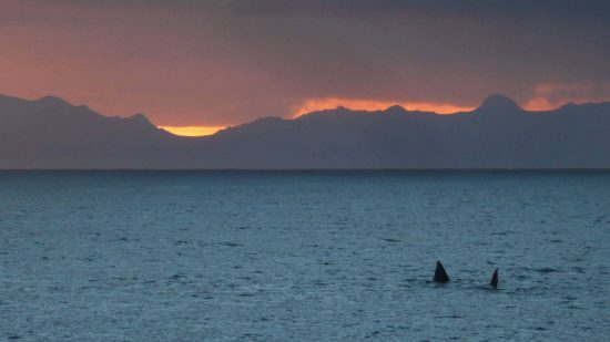 Whales at sunset