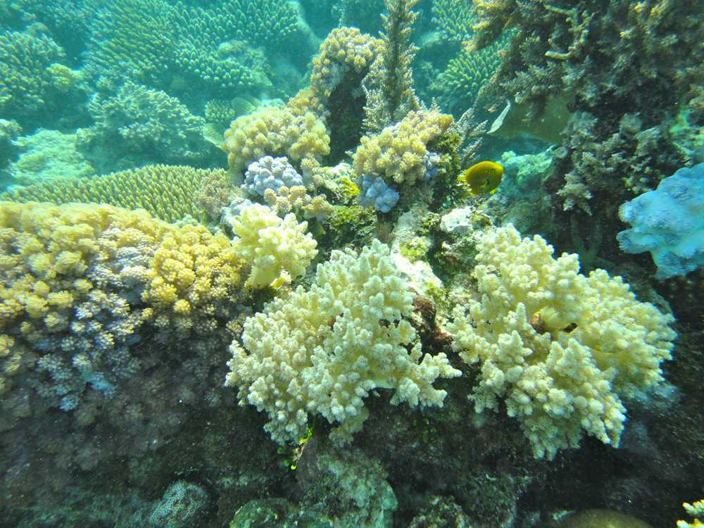 Azura Quilalea has well preserved corals and a diversity of species