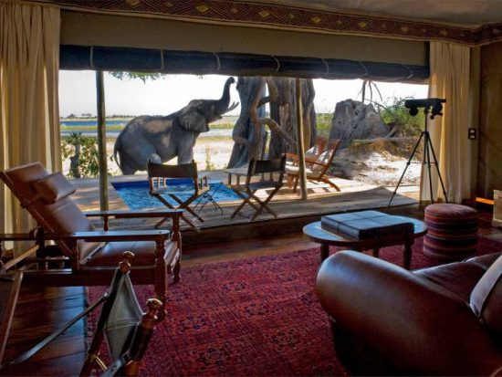 With its proximity and exclusive access to the Zibadianja Lagoon, Zara Camp is one of the best places to stay in Southern Africa
