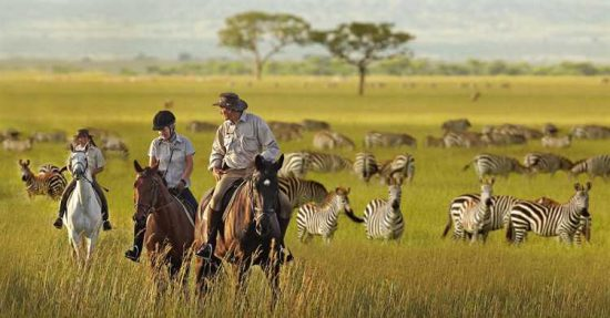 Außergewöhnliche Safaris in Afrika: Auf dem Pferderücken an Zebras im Grasland vorbeireiten