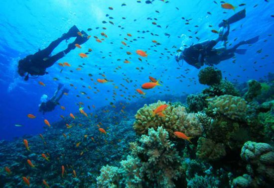 Diving among reefs at Sodwana Bay, South Africa