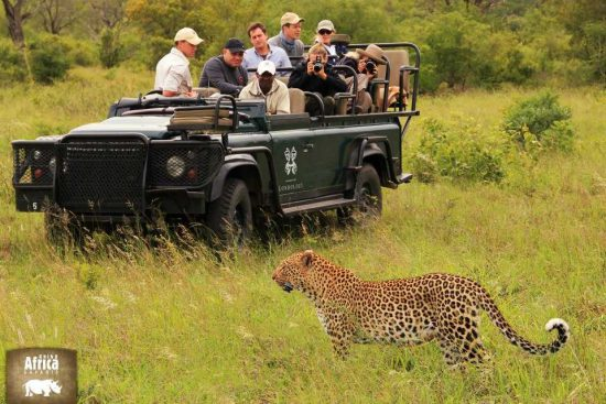 Londolozi guests off-road in the Sabi Sand Private Game Reserve sharing a spectacular African safari moment with the ilusive leopard