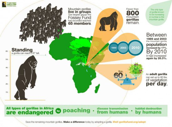 all-types-of-gorillas-in-africa-are-endangered