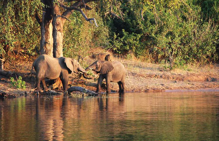 Chobe Chilwero Sanctuary