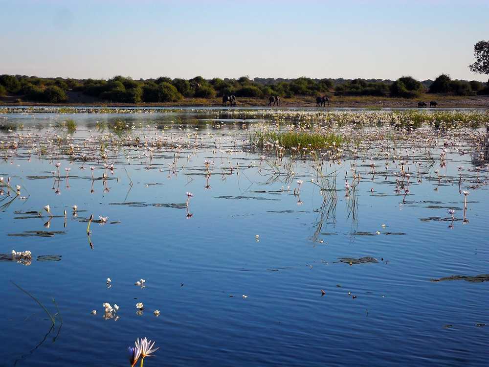 The Chobe River