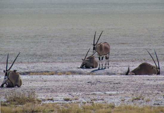"""""""From the arid landscape we moved to Etosha and the Andersson gate and Ongari Bush Camp. We would definitely recommend it - with its waterhole to watch the daily traffic. Being a fully inclusive accommodation, game drives are included. We saw rhinos, lions, zebras, giraffes, warthogs and antelope of all sorts. When you go into Etosha you will see plenty elephants."""""""