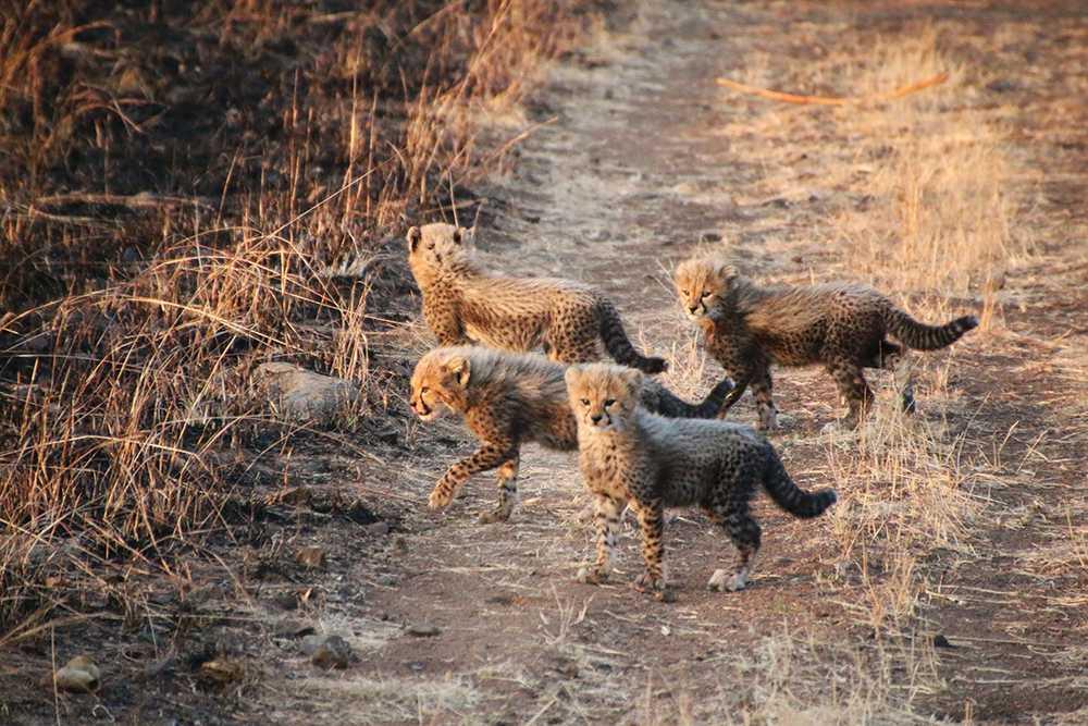 Africa's Wild 3
