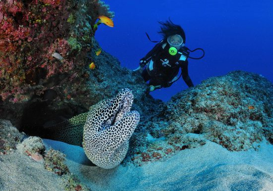 Meeting an eel while diving at Reunion Island