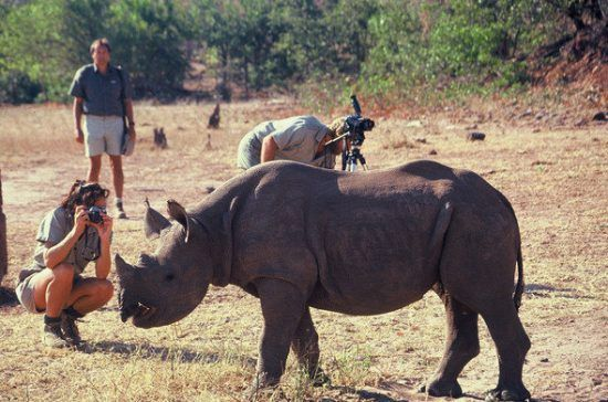 Walking safaris at Victoria Falls offers intimate encounters