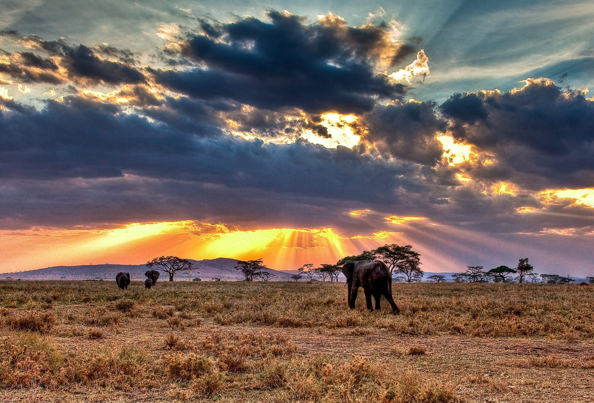 Elephant in the African bush with sun in the clouds