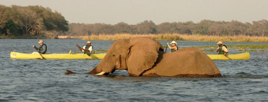 canoeing-with-elephants-in-Africa