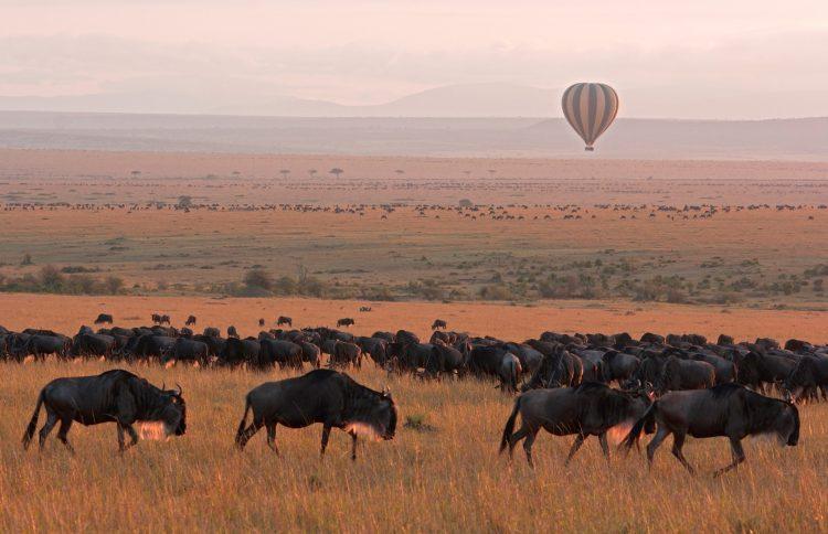 Heißluftballon-Safari bei Sonnenuntergang über einer großen Herde Gnus
