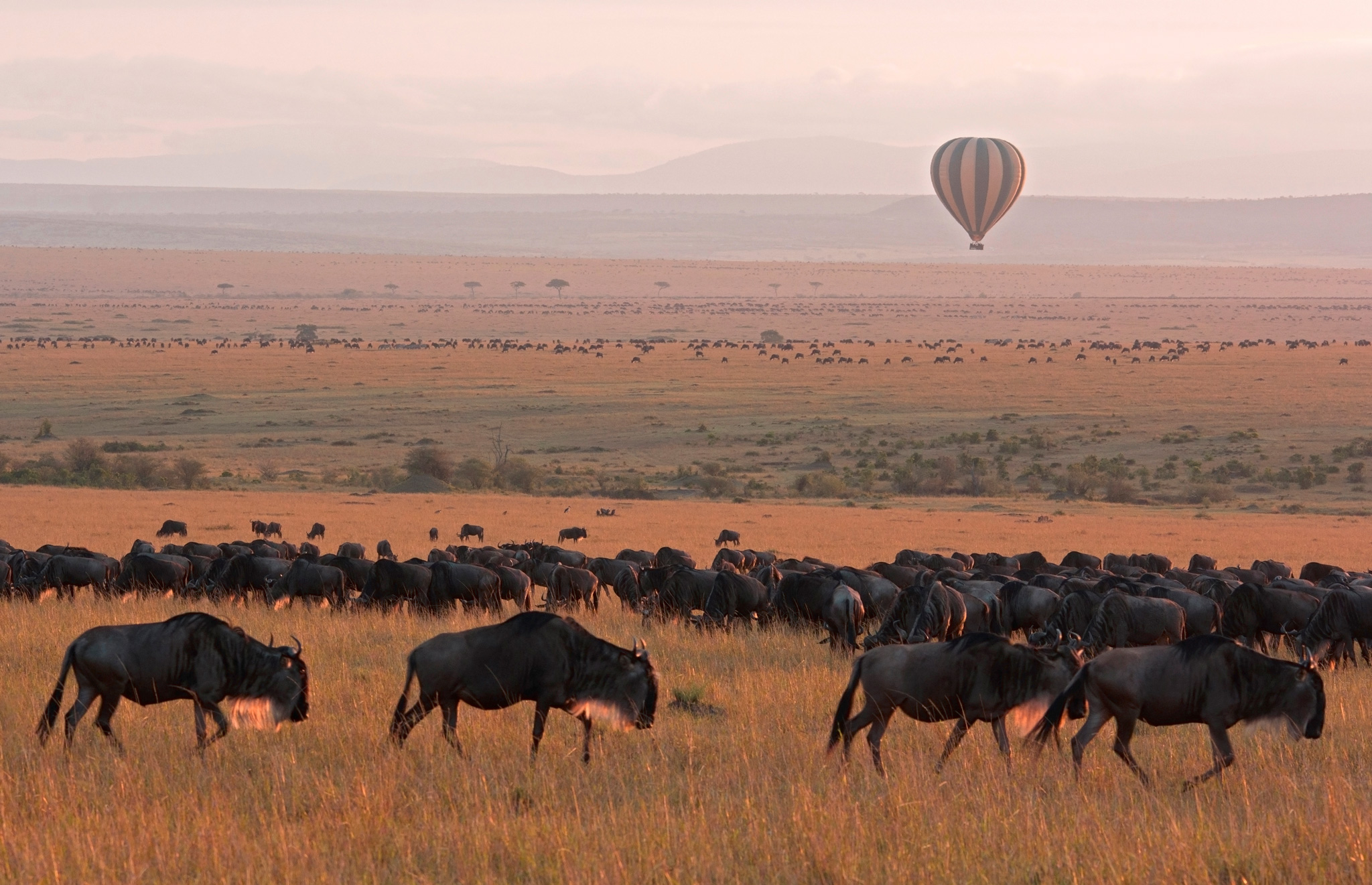 Hot Air Ballooning Serengeti National Park in Tanzania