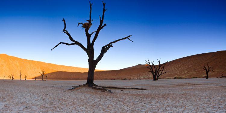 Sossusvlei mit vertrockneten Bäumen und Sanddünen - Namibia