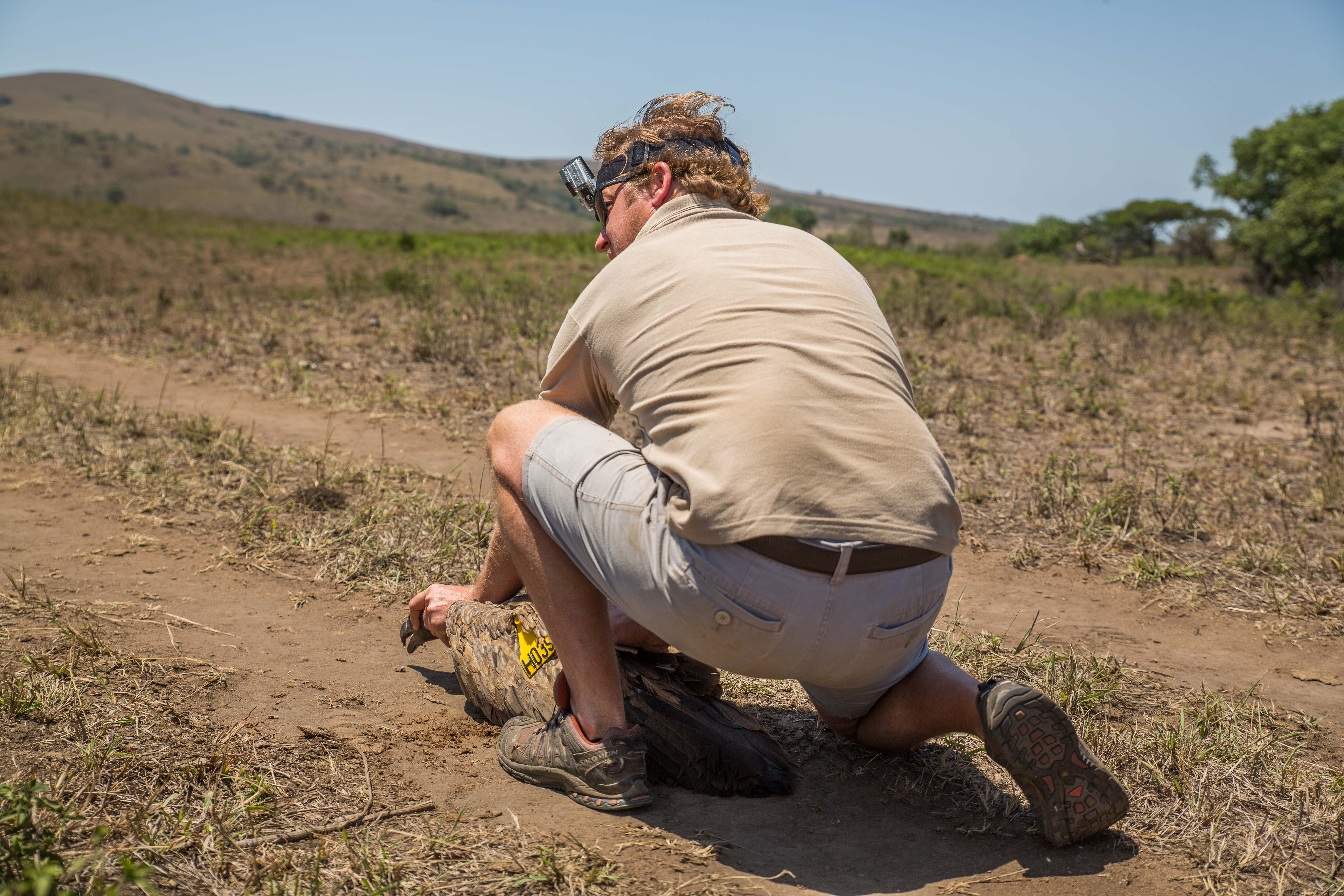 Vulture Release in South Africa