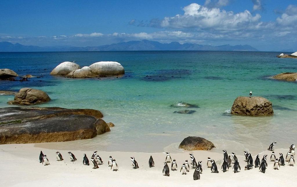 boulders-beach-penguin-colony-things-to-do