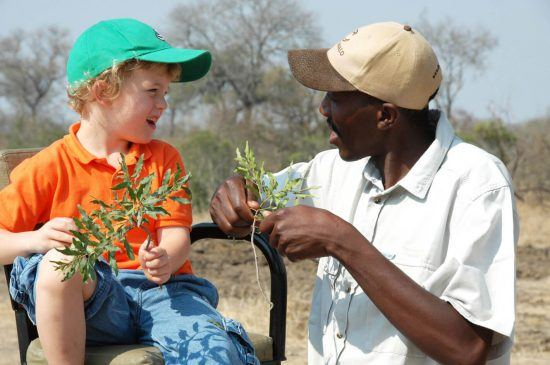 Tintswalo guide teaches a boy about plants