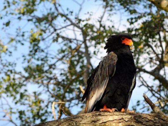Birding safaris offer you a glimpse of rare birds