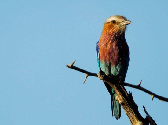 Birding Safaris at Cheetah Plains