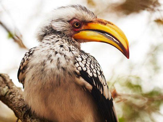 Spot beauties such as the hornbill on Birding Safari