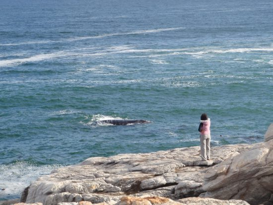 Observe whales at the edge of a cliff