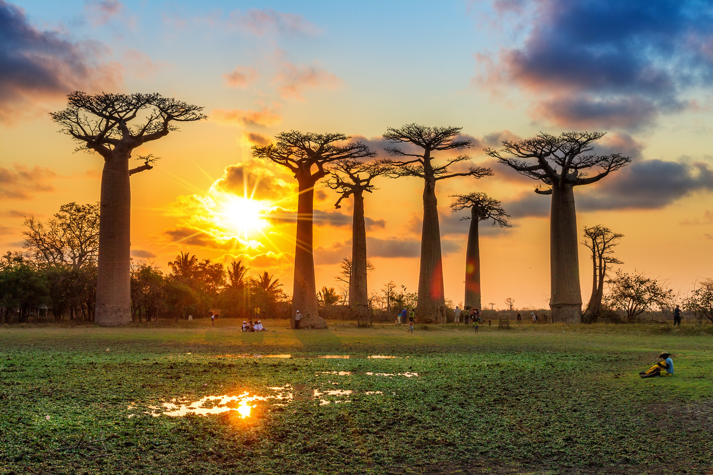 Avenue of baobabs with sunset